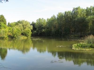 Horsehoe Lake